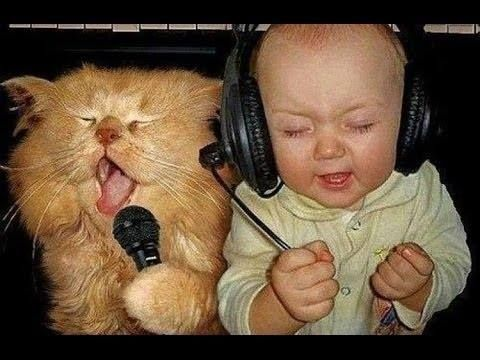 getting into the groove with your cat.... Cats doing