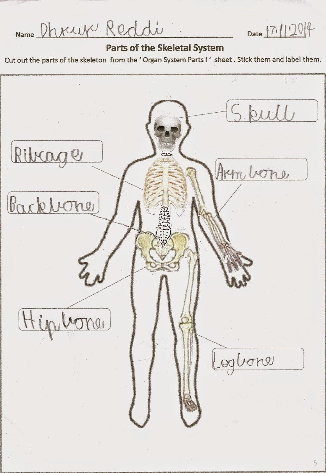 Happy Learners Science Blog For Teaching 7 8 Year Olds Today S Topic Human Body Organ Systems