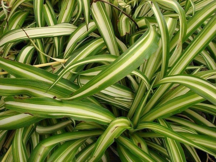5 plantas para desintoxicar tu hogar Plantas Pinterest Plantas - plantas para jardin