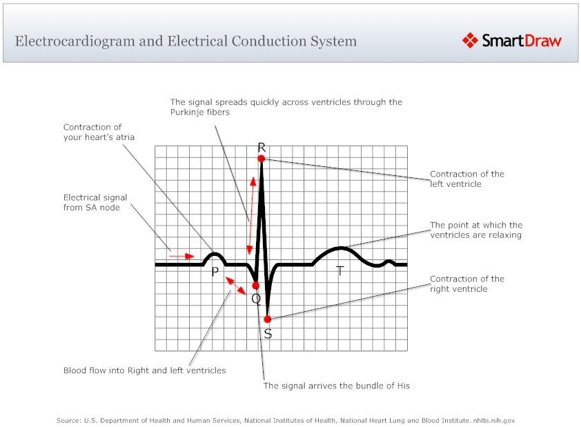 Worksheet of Heart Conduction System | Example Of Conduction ...