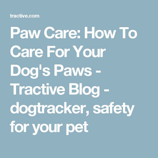 How To Guide Protect Your Dog S Feet Like A Pro Paw Care Dog Paws Dog Life Hacks
