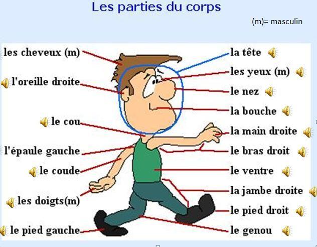 Lecon Pour Enfants Sur Les Parties Du Corps Flashcards Bingo Audio Ensenanza De Frances Frances Gramatica Idioma Frances