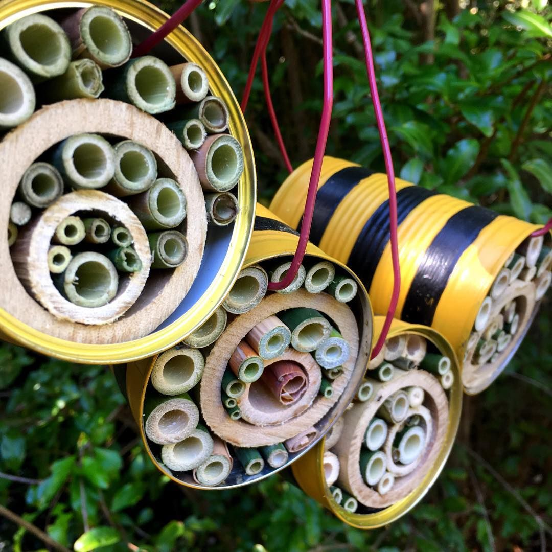 Making some tin shack native bee hotels. A fun way to recycle tin cans ♻️🐝    Recycled tin cans, Bee hotel, Recycled tin