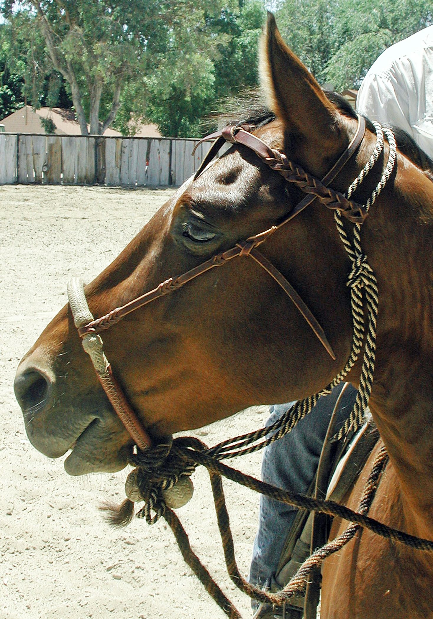 The 11 Most Common Bridle Bits Types | ProHorse
