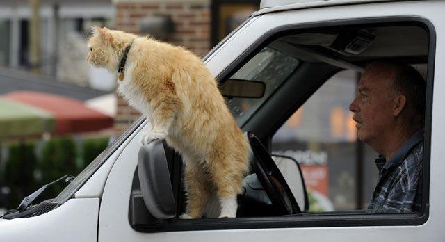 Jasper the cat is on the lookout as owner Steven Daniel, a