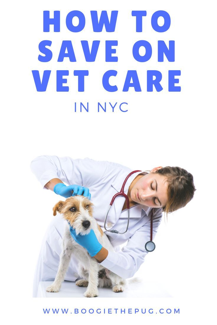 Pin on DogFriendly NYC