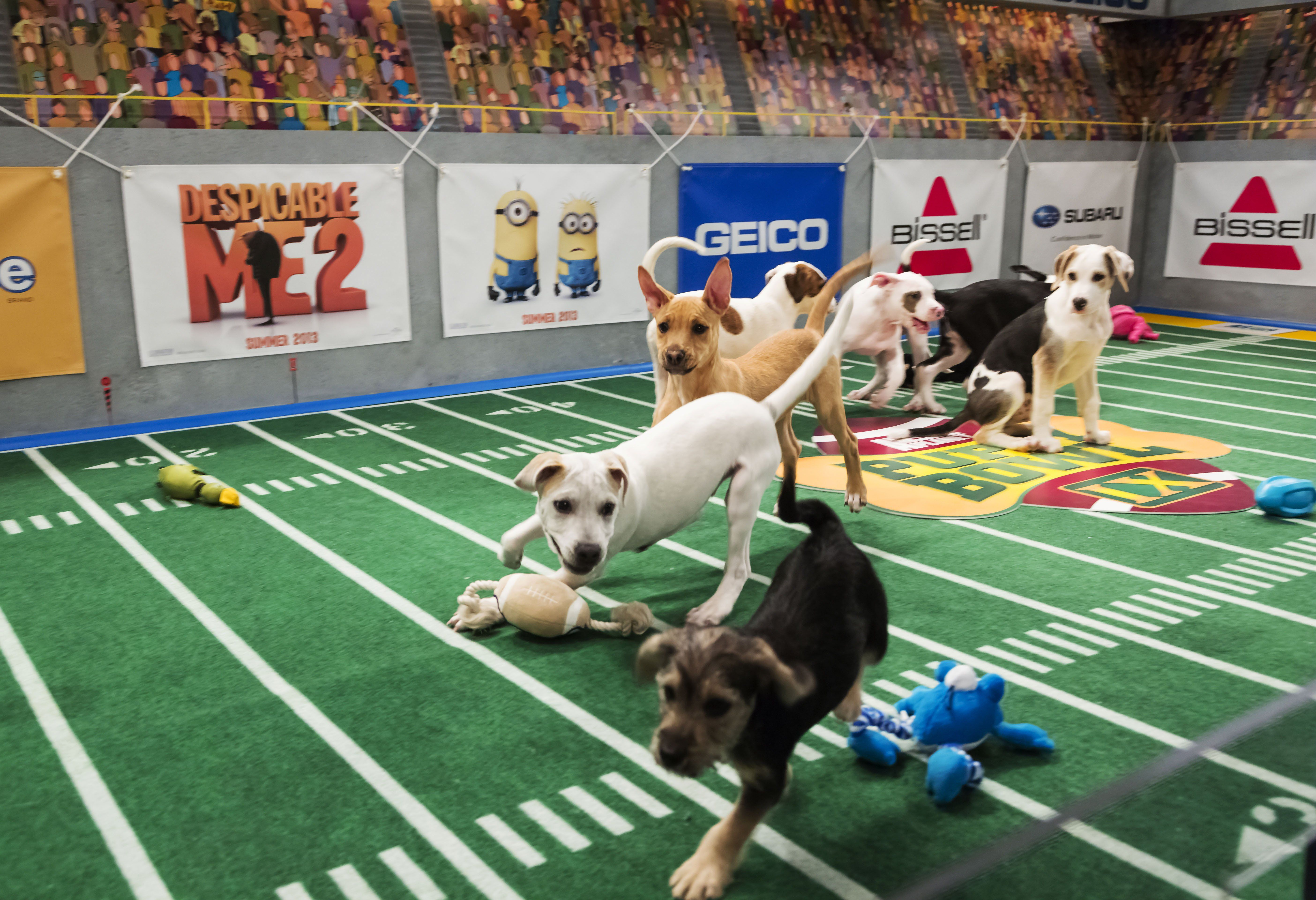 Puppy Bowl X The most anticipated sporting event of For many