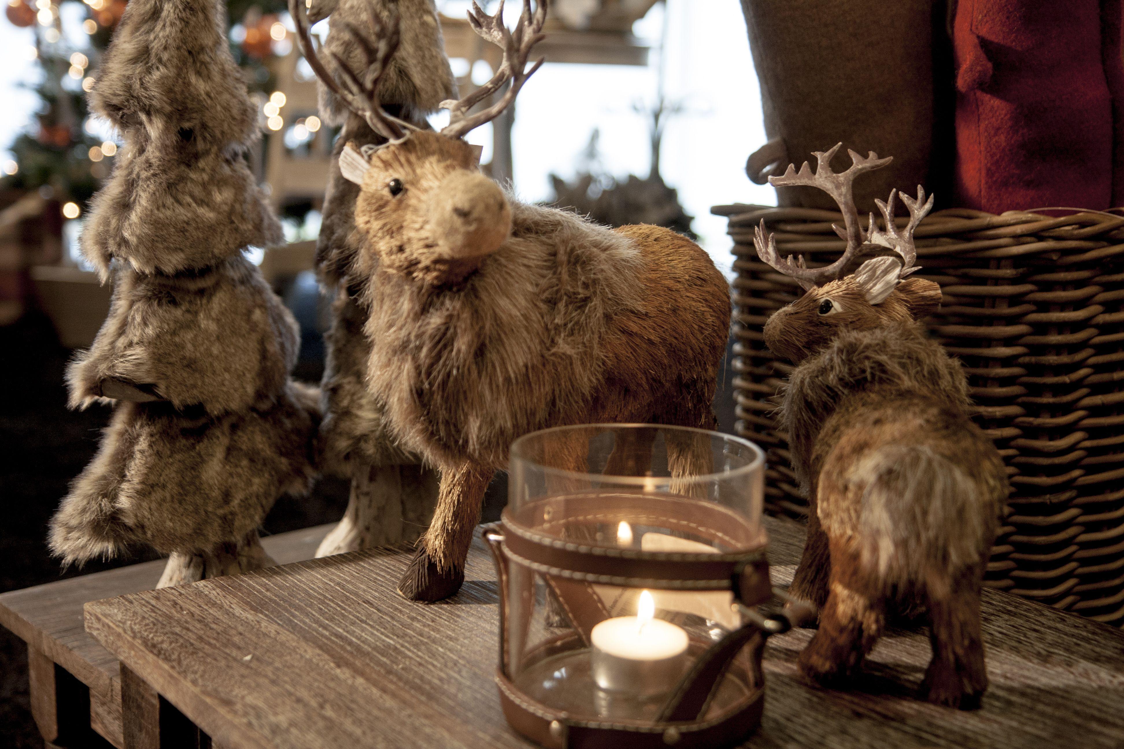 Kerstversiering kan ook zeer stijlvol zijn. Wacht dacht je van deze prachtige rendieren? Te koop bij meubelen-heylen.com