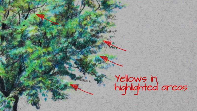 how to draw a tree with colored pencils tree pinterest colored