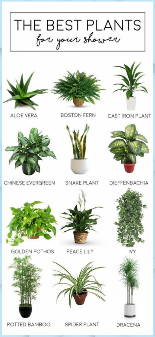 The Best Bathroom Plants The Tao Of Dana Feng Shui Home Decor The Best Bathroom Plants The In 2020 Apartment Plants Indoor Plants Bathroom House Plants Indoor