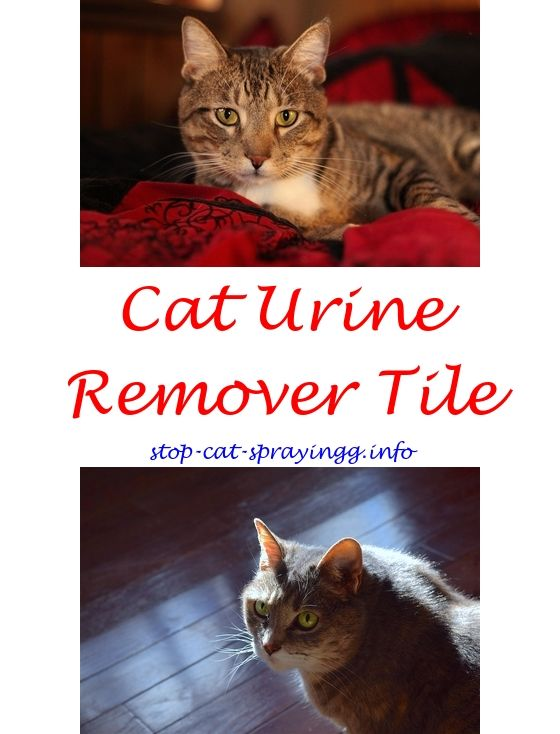 dfd888d8605ca57f11a210b26e8f2cf5 cat urine water raid spray and cats homemade cat repellent outdoor