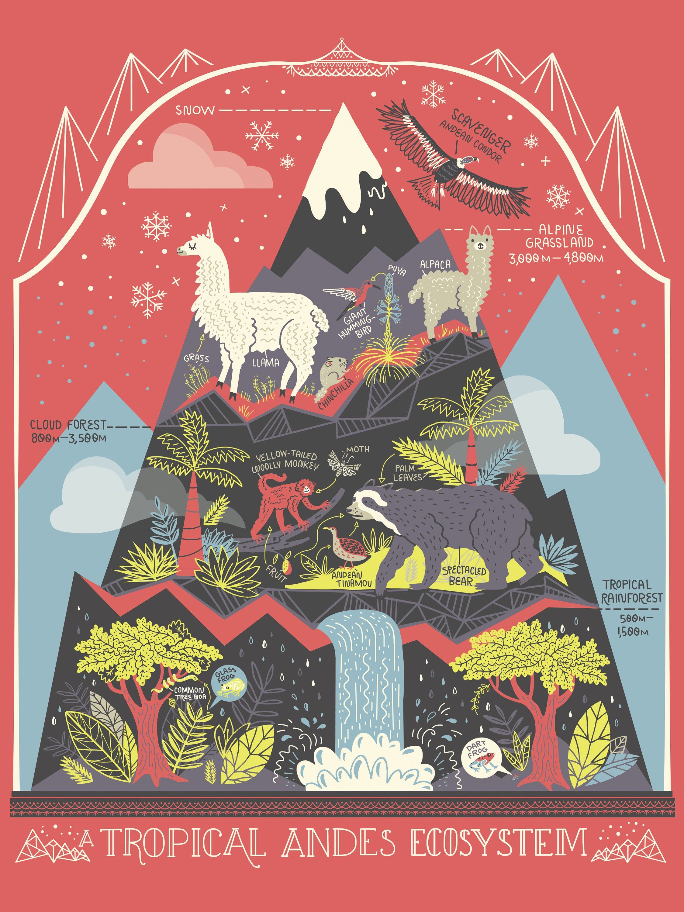 The Andes Mountain Ecosystem Terrarium Art Print In