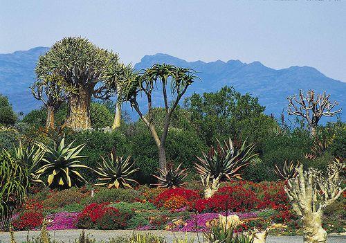 gardens of eden - Buscar con Google. Weltevrede Farm - Prince Albert, South Africa
