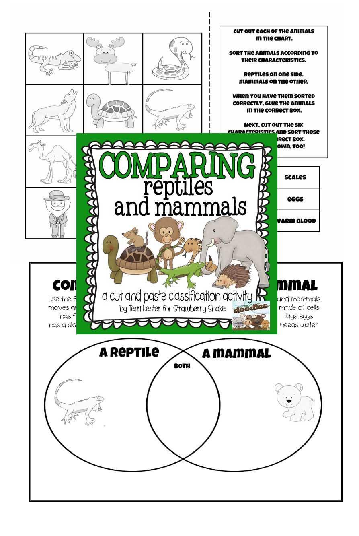 Animal Classification Worksheet For Kindergarten
