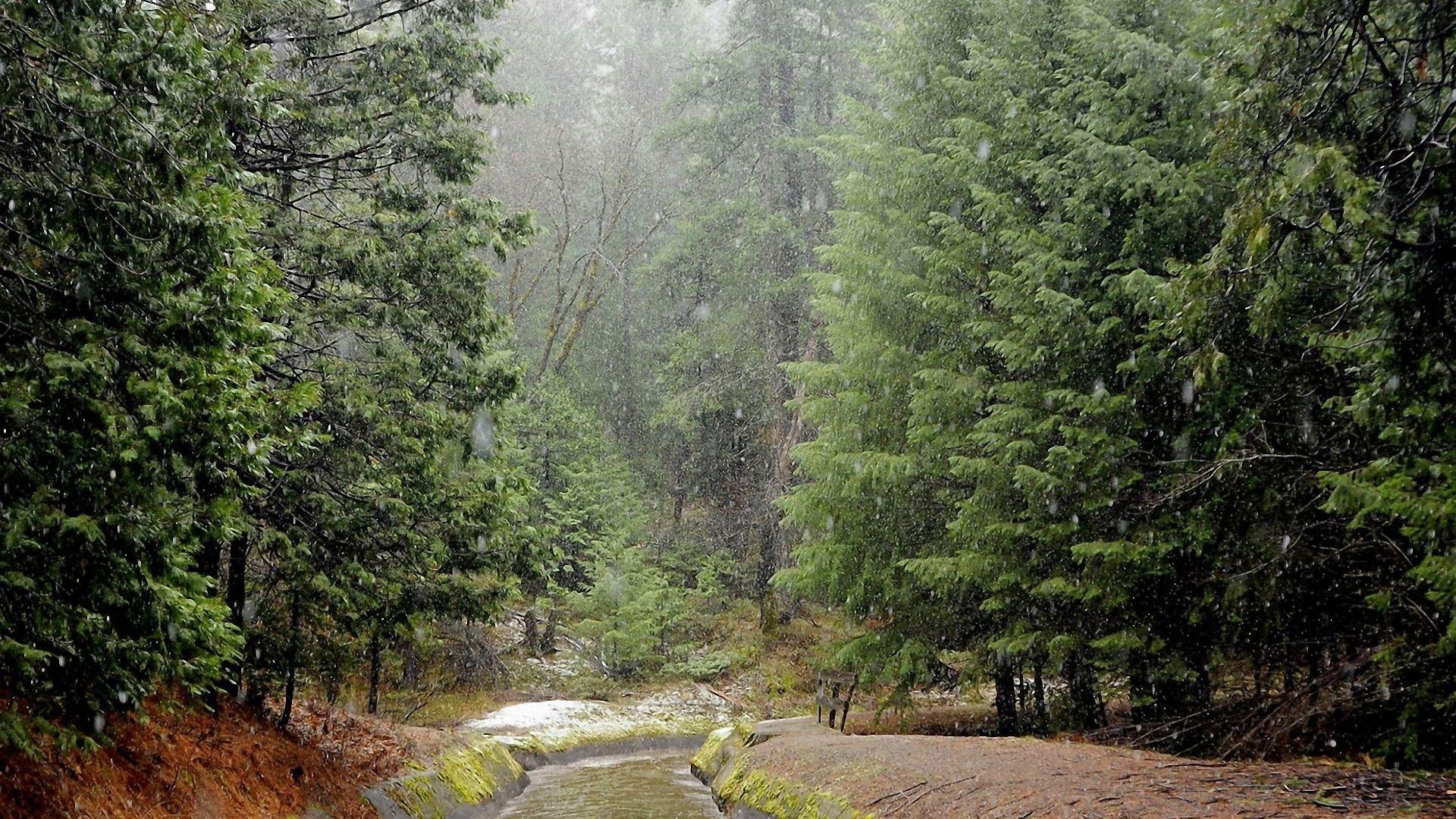 формирование переформирование дождь в лесу обои и картинки мой