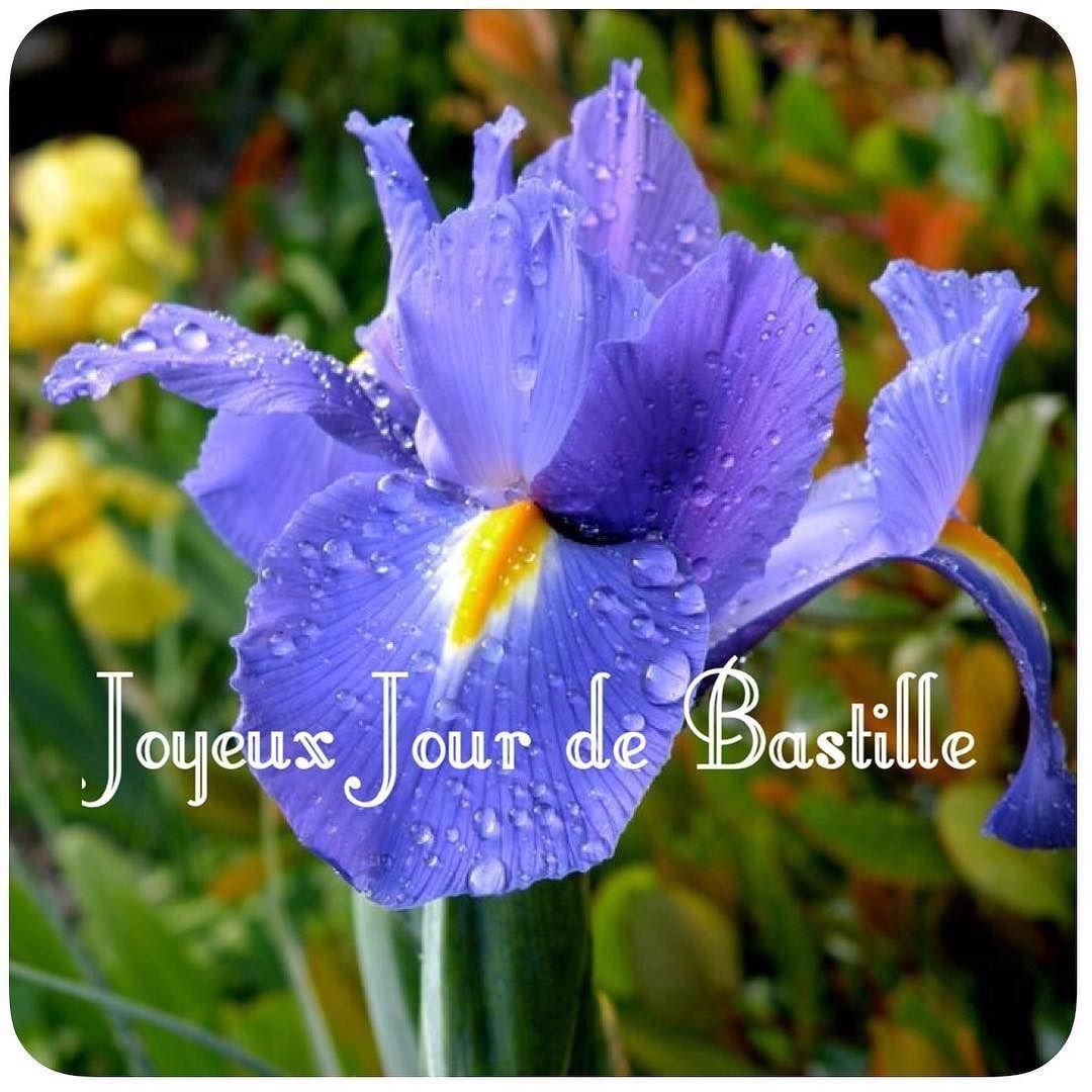 Vive La France Bastilleday France Iris Feurdelys Vivelafrance Iris Flowers Beautiful Flowers Trees To Plant