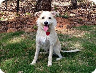 Hi my name is Benny and I am available for adoption.  I am in the Conyers/Covington, GA area