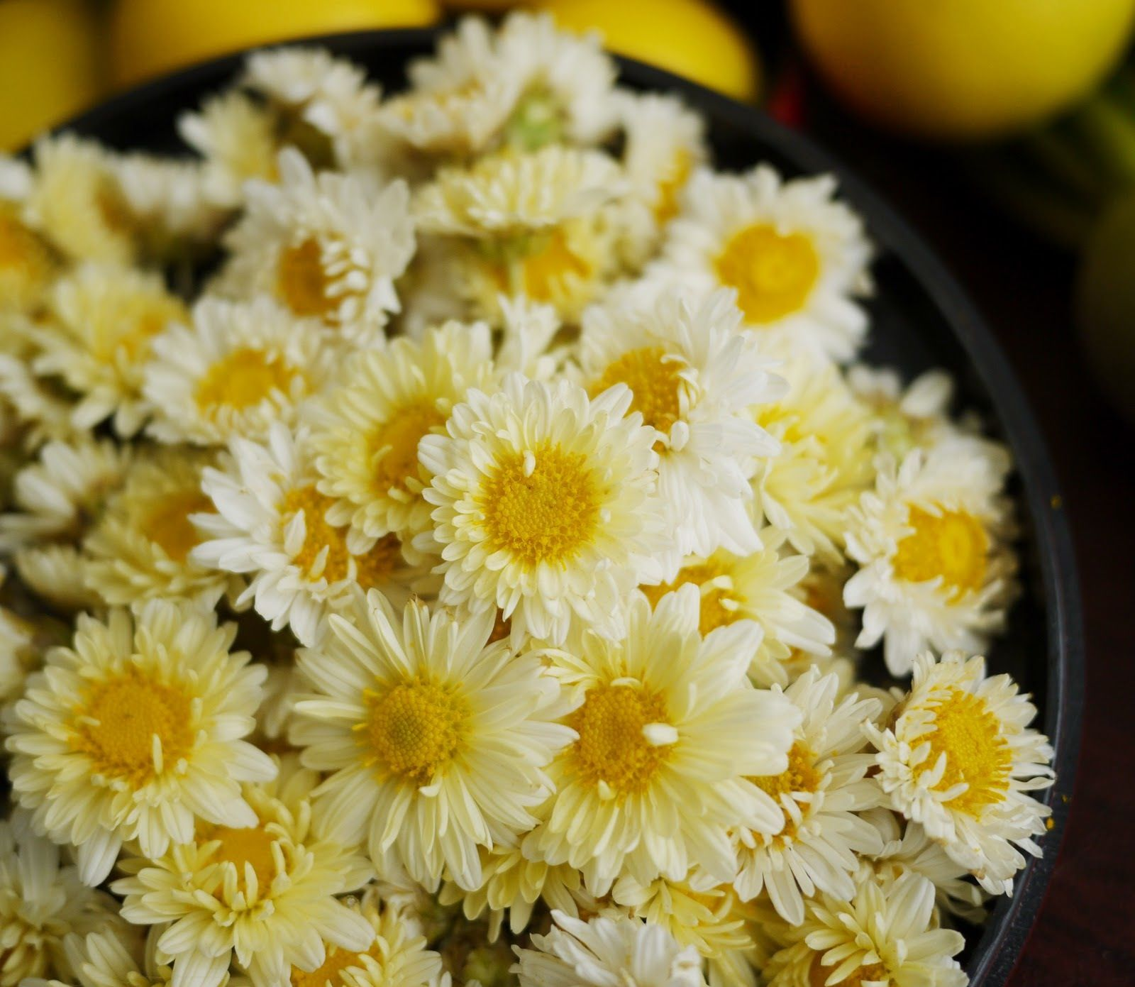 Pin By Asa Seamur Bey On Flower Inspiration In 2020 Chrysanthemum Flower Chrysanthemum Tea Herbal Teas Recipes