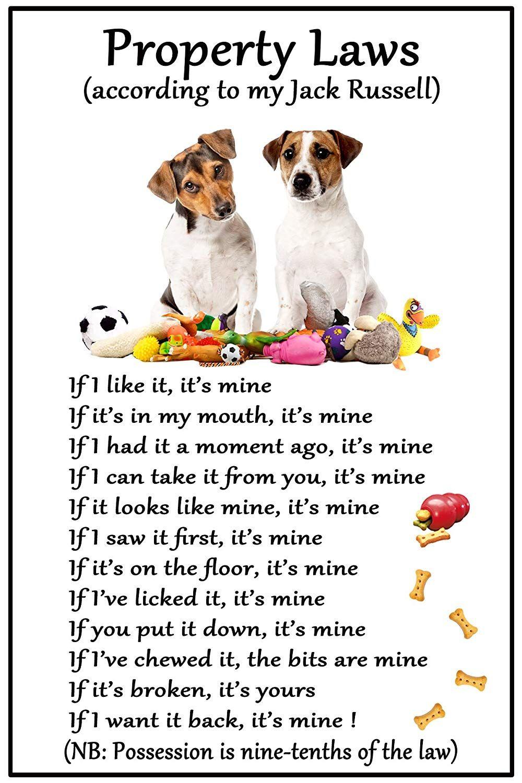 Google Image Result For Https Images Na Ssl Images Amazon Com Images I 81kzjf3lwjl Sl1500 Jpg In 2020 Jack Russell Terrier Jack Russell Terrier