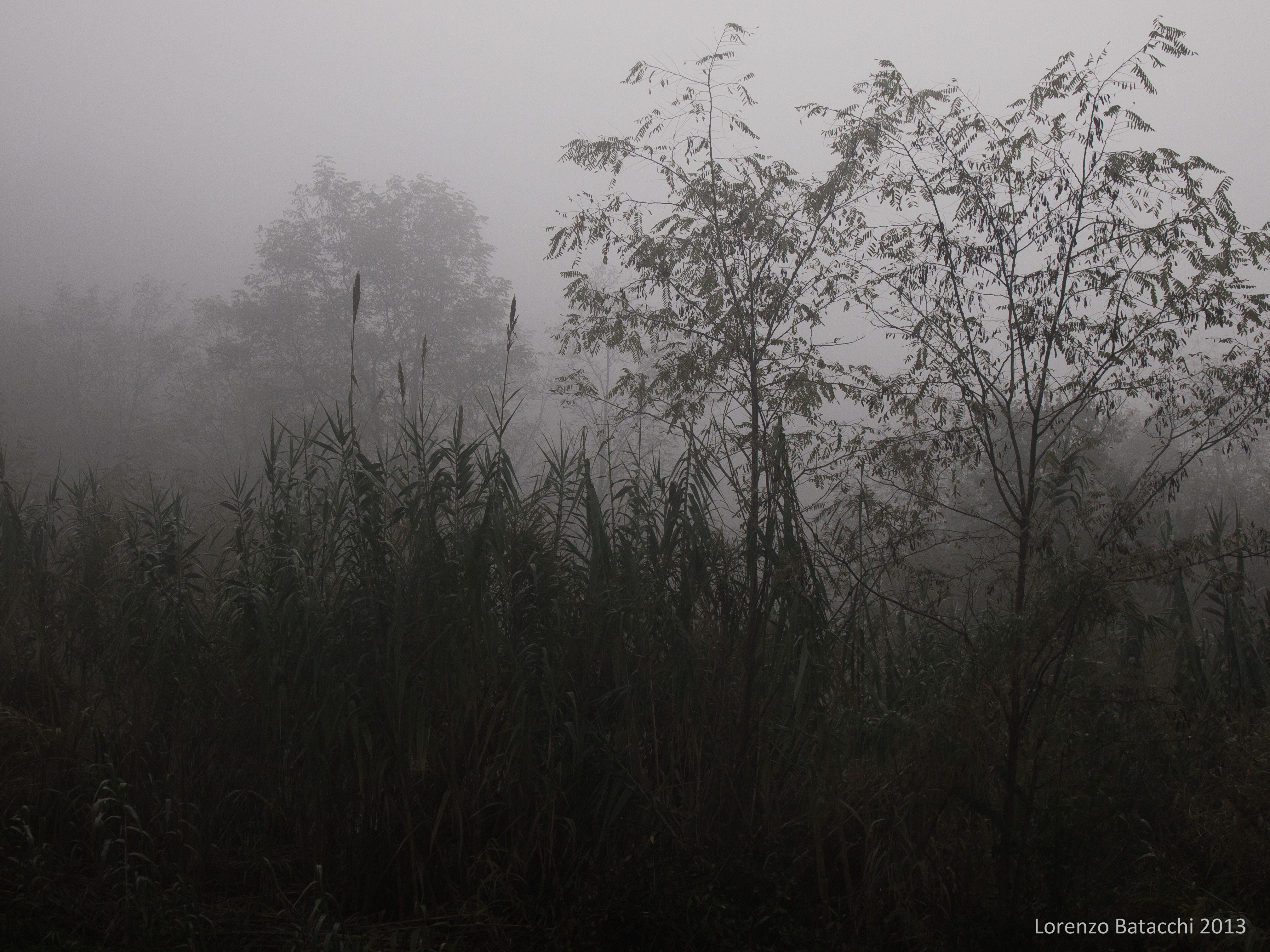 una fredda, nebbiosa mattinata, vista dal cimitero di Settignano.