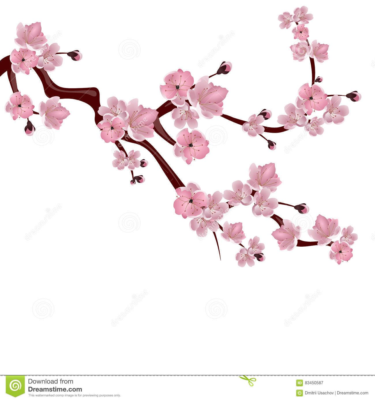 Japanese Cherry Tree A Branch Of Pink Cherry Blossom On White Background Illustration S Japanese Cherry Tree Cherry Blossoms Illustration Wildflower Drawing