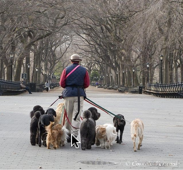 New York Dog Walker I Can Think Of Worse Ways To Make A Living Nyc Dogs Dog Walker York Dog