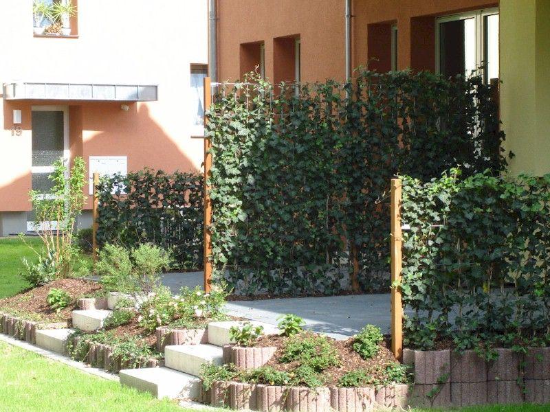Efeu Woerneri Garten, Sichtschutzhecke und Pflanzen