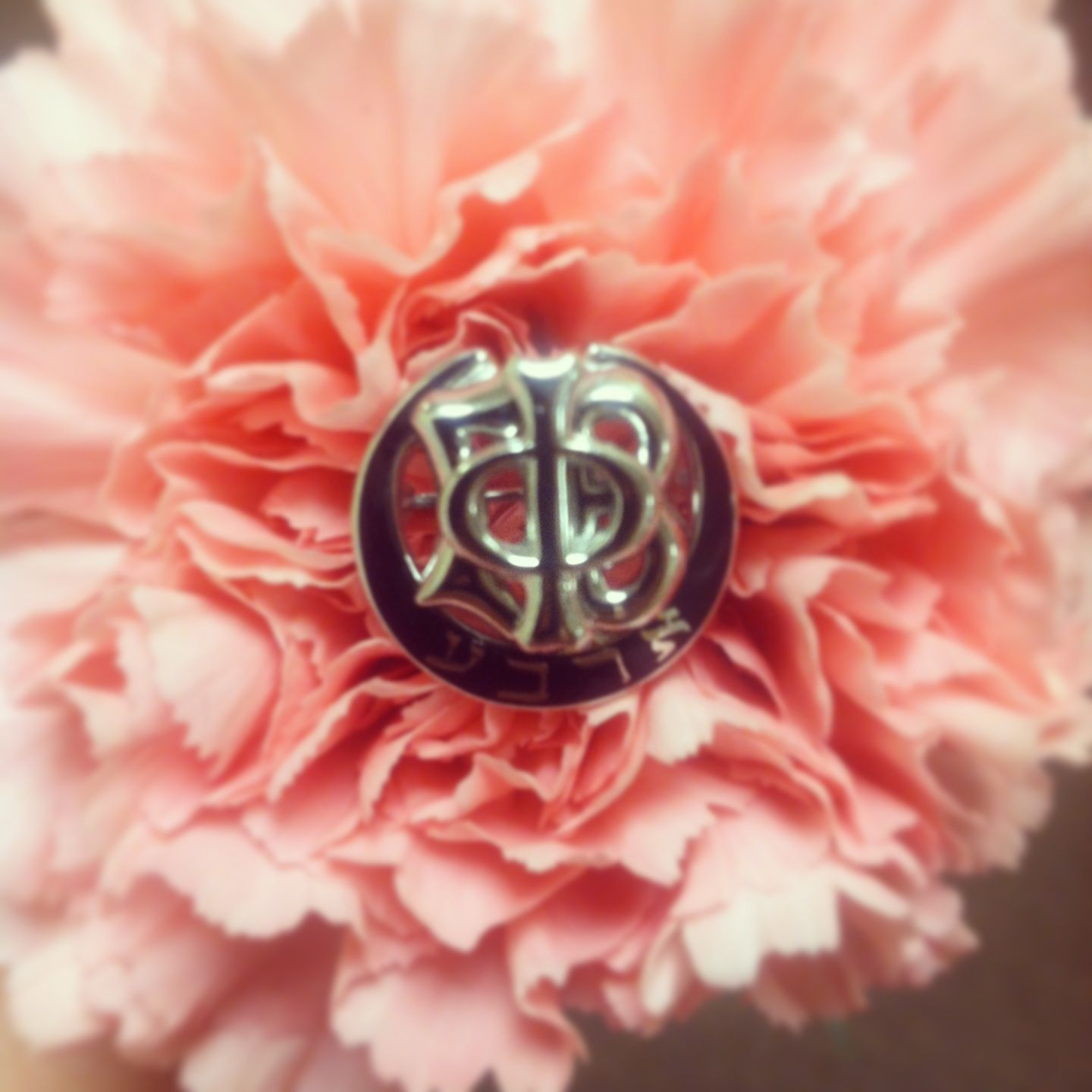 Gamma Phi Beta\'s flower is the pink carnation. The official colors ...