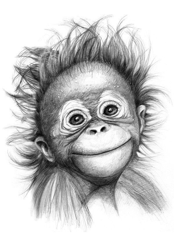 Happy orang outan baby G2015121 graphite drawing by