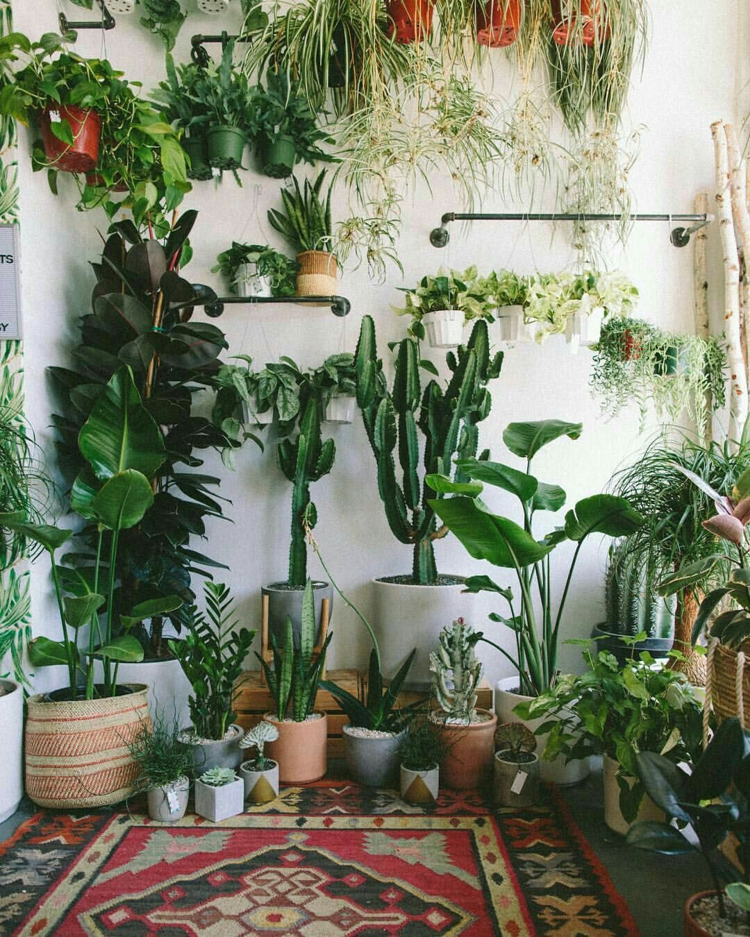 Green dream  Room with plants, Plant decor indoor, Plant decor