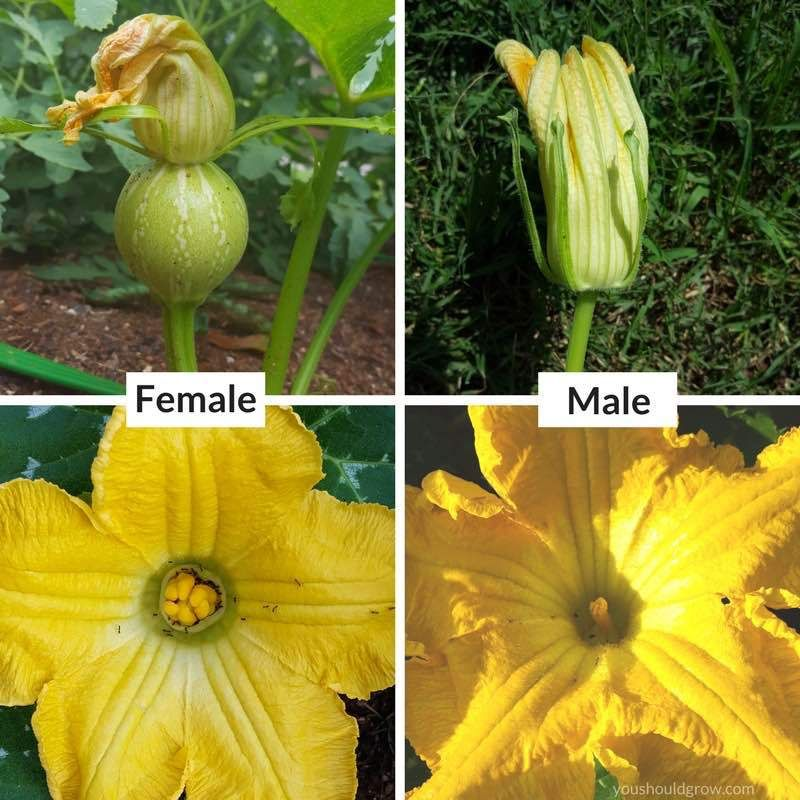 Whats The Difference Between Summer And Winter Squash -9505