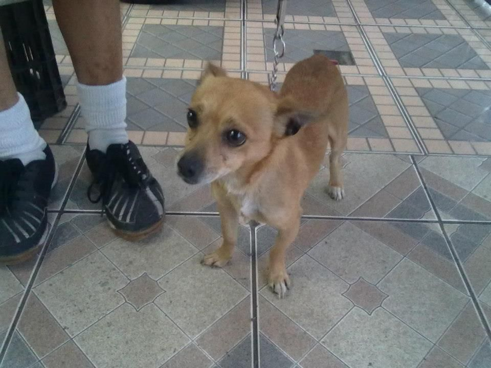 This little dog needs a home  https://www.facebook.com/photo.php?fbid=4271780846660=p.4271780846660=1