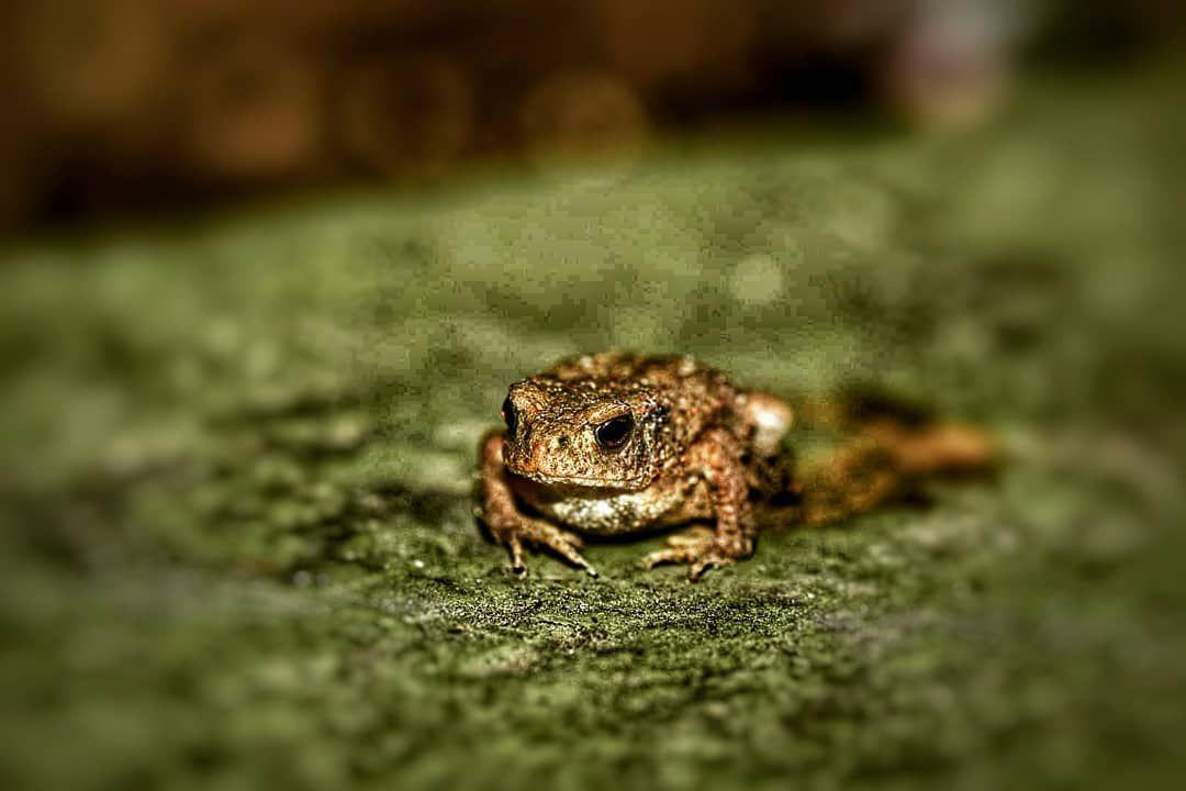 Krote Nature Animal Fotografie Photography Garten Garten Fotografie Krote