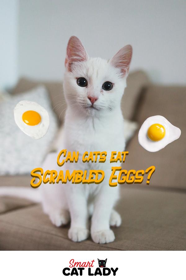 Can Cats Eat Scrambled Eggs Cats, Cat facts, Cute cats