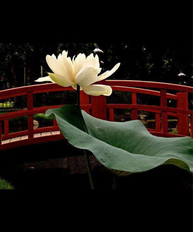 """""""The mind can go in a thousand directions, but on this beautiful path, I walk in peace. With each step, the wind blows. With each step, a flower blooms.""""     ~ Thich Nhat Hanh"""