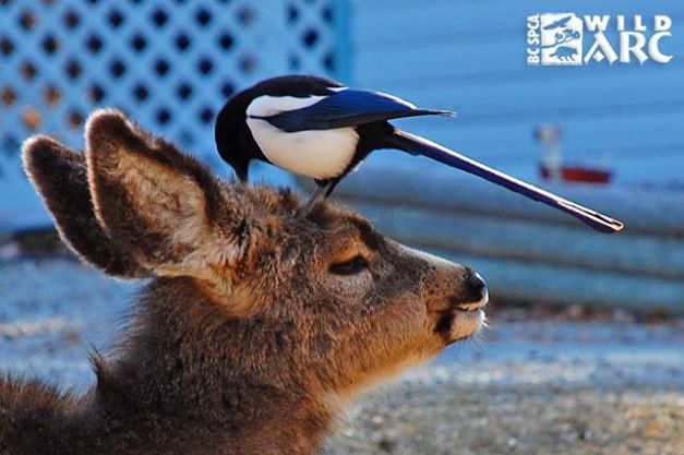 What are these two up to? Well, that's for you to caption! Add your funniest one-liner for this picture in the comments below. #captionthis  This wonderful picture was submitted by Deborah Lee Puder for our #wildlifeinfocus contest.