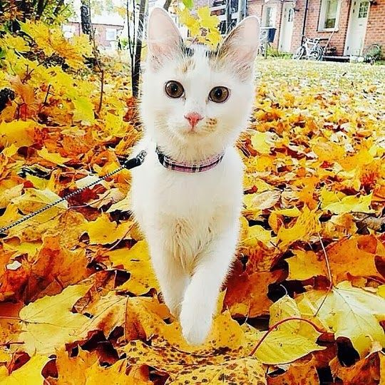 Cat from Bålsta, Sweden