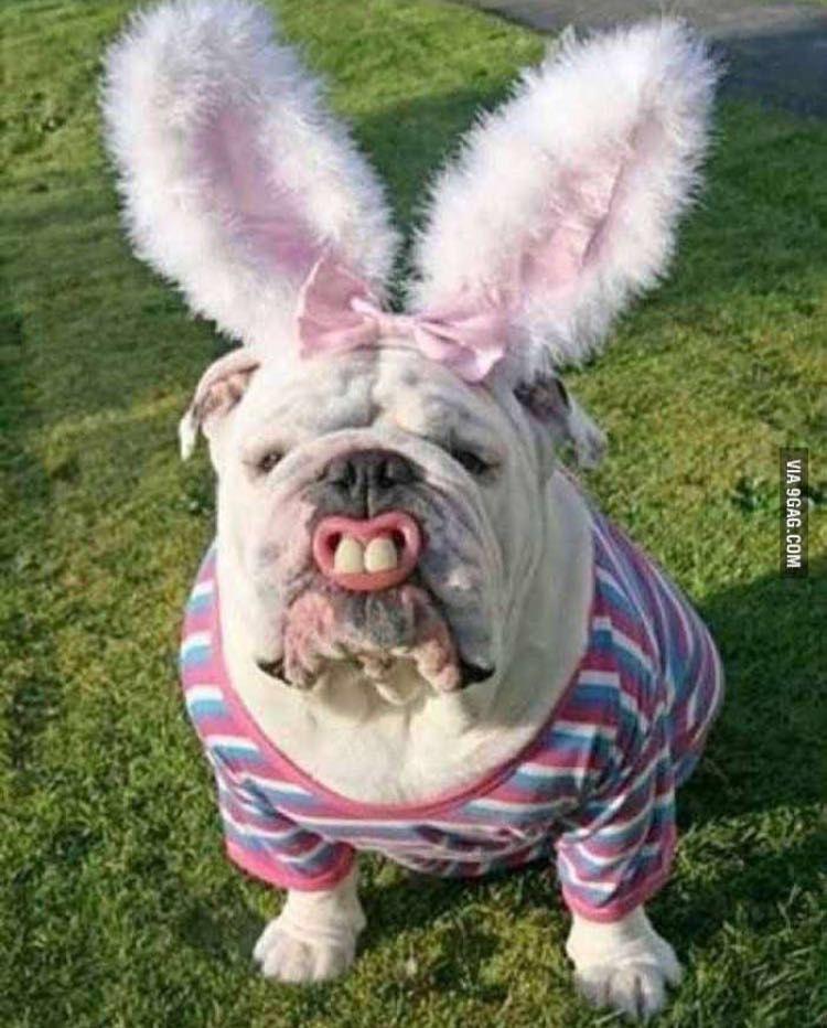 Feliz Páscoa!!!!