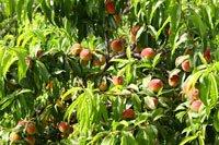 Obsthecke anlegen – So wird's gemacht