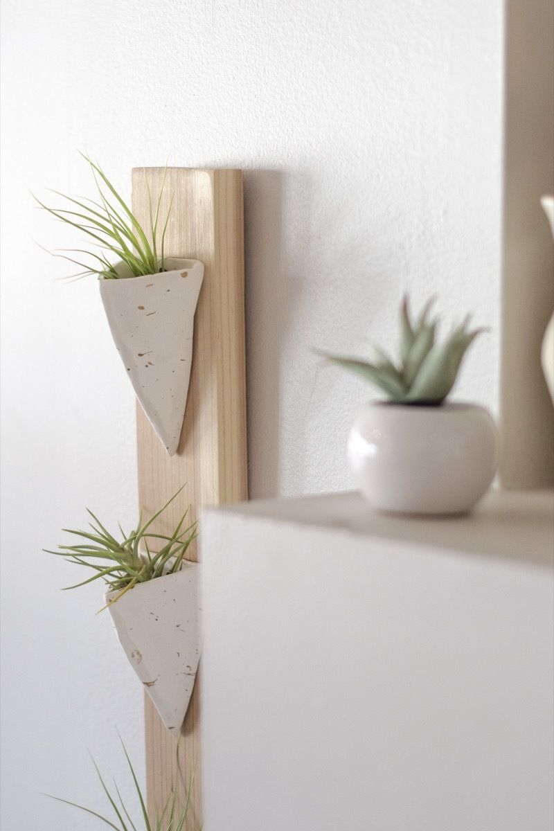 Make This Easy Wall Mounted Air Plant Holder Plant Holder Diy Wall Mounted Air Plant Diy Holder