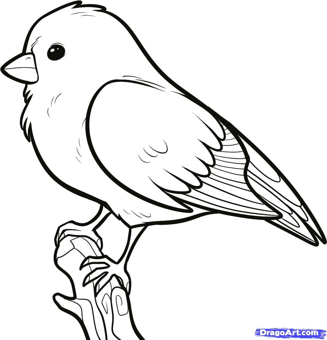 Line Drawing Of Animals And Birds : How to draw a songbird songbirds step birds