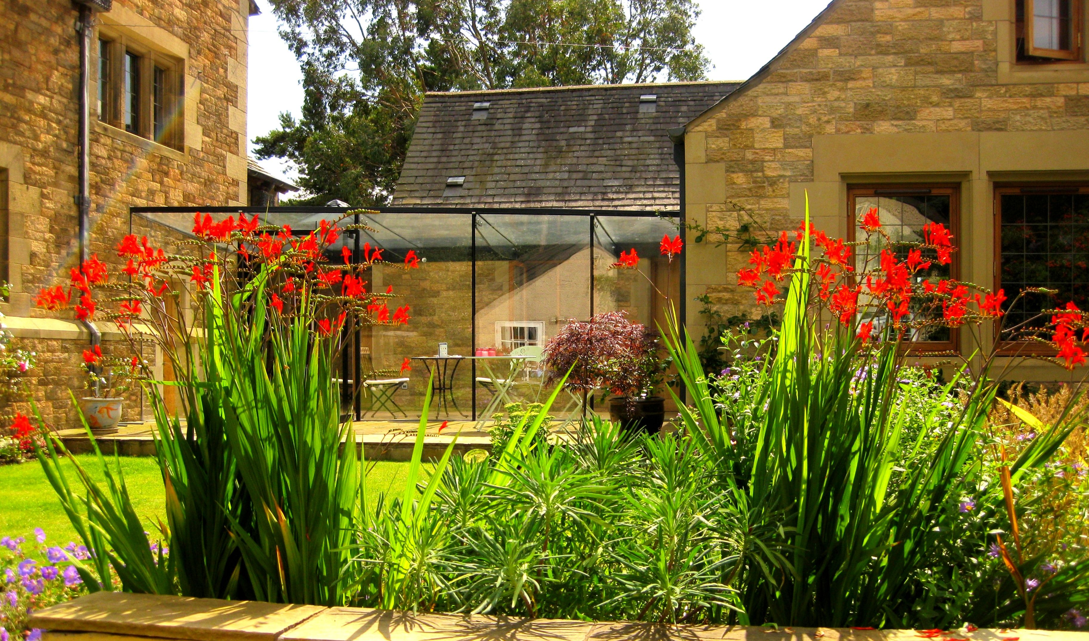 Crocosmia Lucifer in an East Lothian garden in Scotland designed by ...