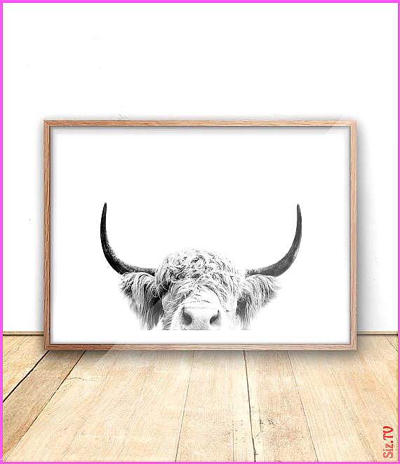 Highland Cow Print  Farm Animal Wall Art Digital Download Cow Poster Cattle Photography Animal Portr...