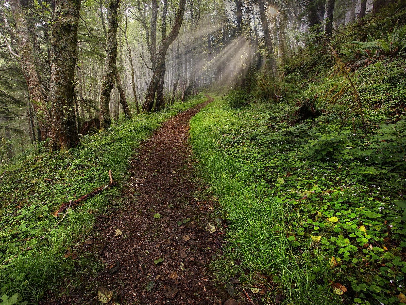 landscapes nature trees forest sunlight roads #trailrunning