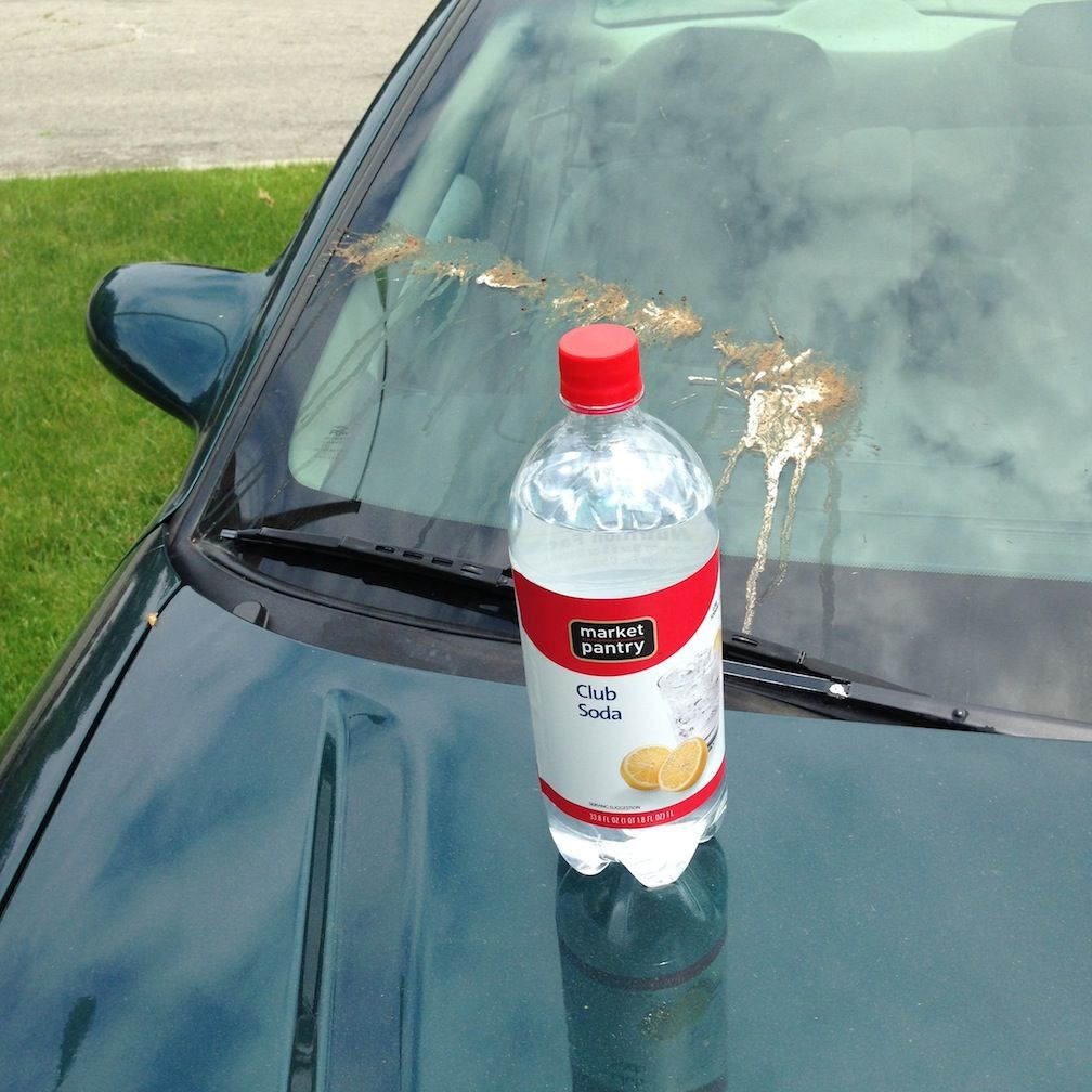 How to get rid of bird poo off your windshield. Car