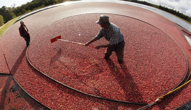 Eat cranberries from Massachusetts' cranberry bogs. http://bit.ly/1OzsLeC