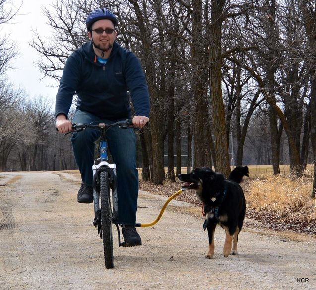 Product Review Bike Tow Leash Bike Dog Friends Dogs
