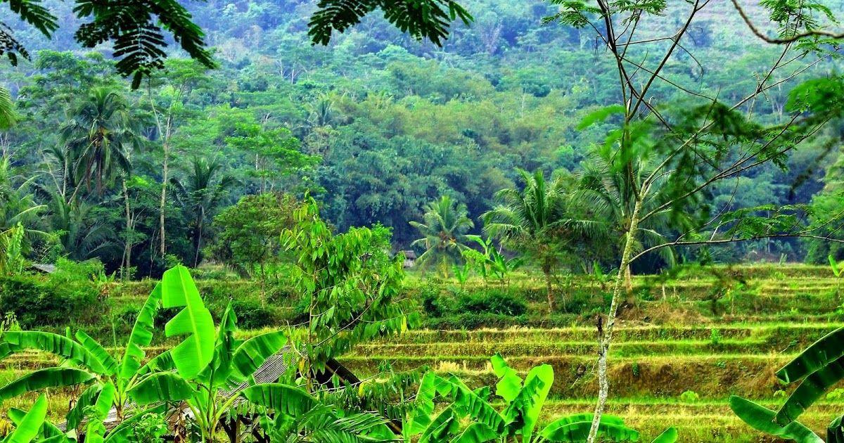 Download Wallpaper Pemandangan Alam Indonesia Indofotograph Com Source Pinterest Com Download Gambar Pemandangan Alam Da Di 2020 Pemandangan Fotografi Alam Foto Alam