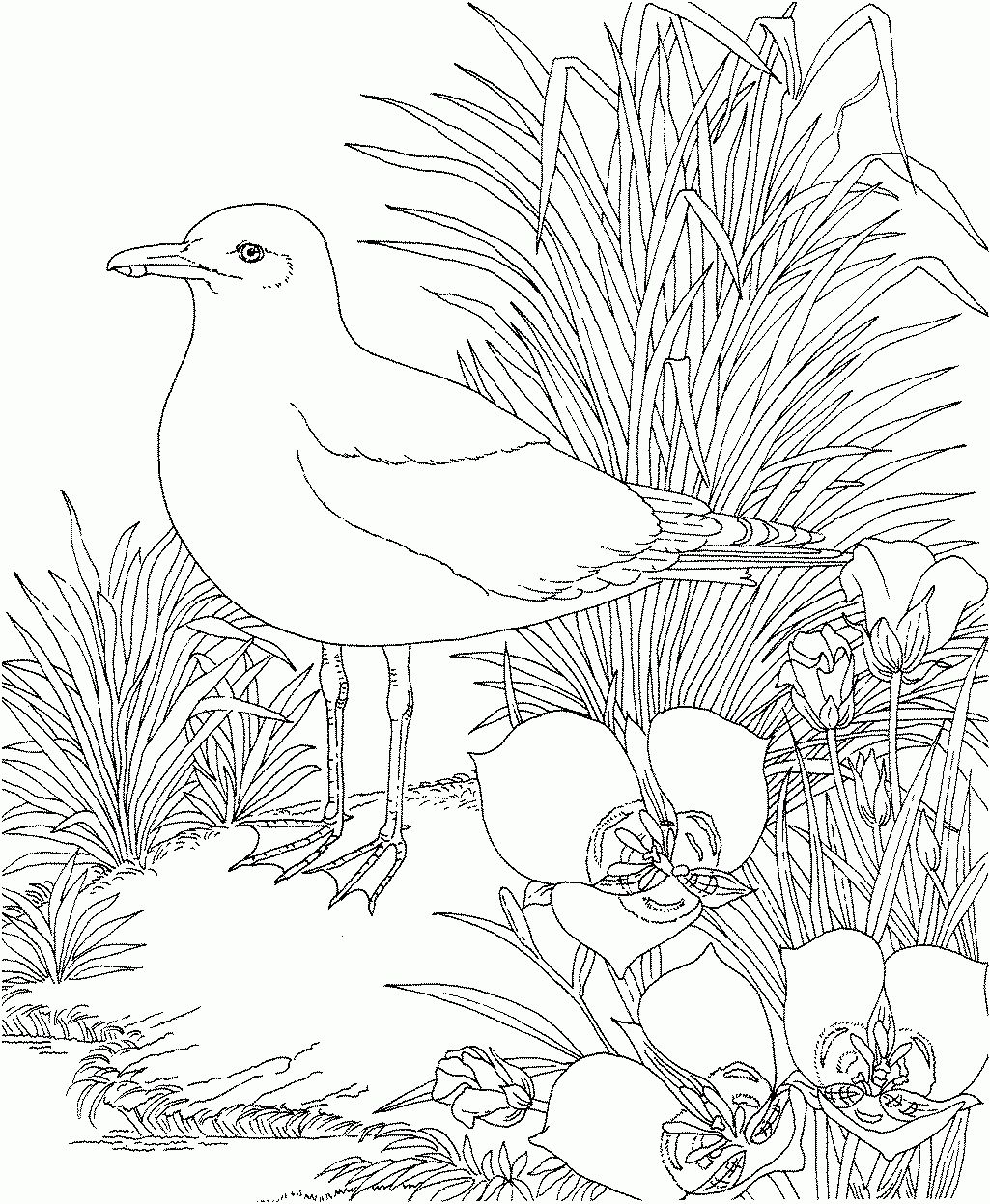 Free Printable Flower Coloring Pages Flower State Bird Free ...