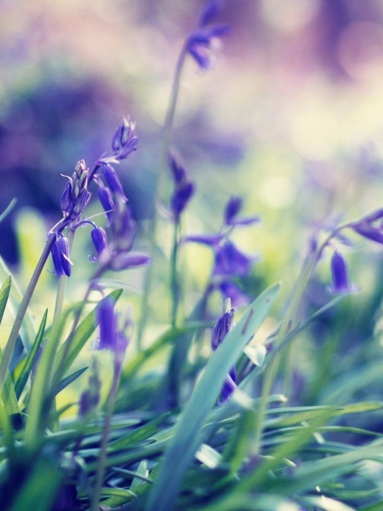 Purple Spring Flowers Wallpapers My Love For Spring Spring